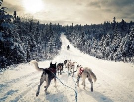 В гости к снежным псам Хаски!