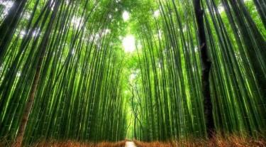 "Групповой Гранд Тур в Японию""Миядзима – Курасики – Химедзи – Киото"""