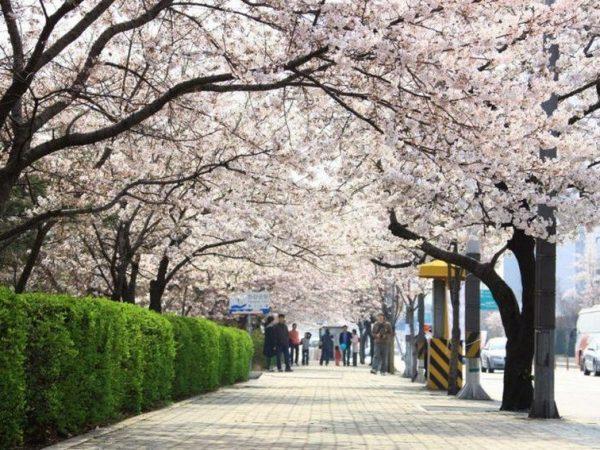 Весенние каникулы в Сеуле (авиа)