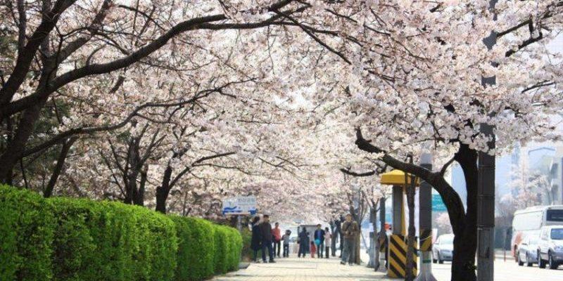seoul_spring